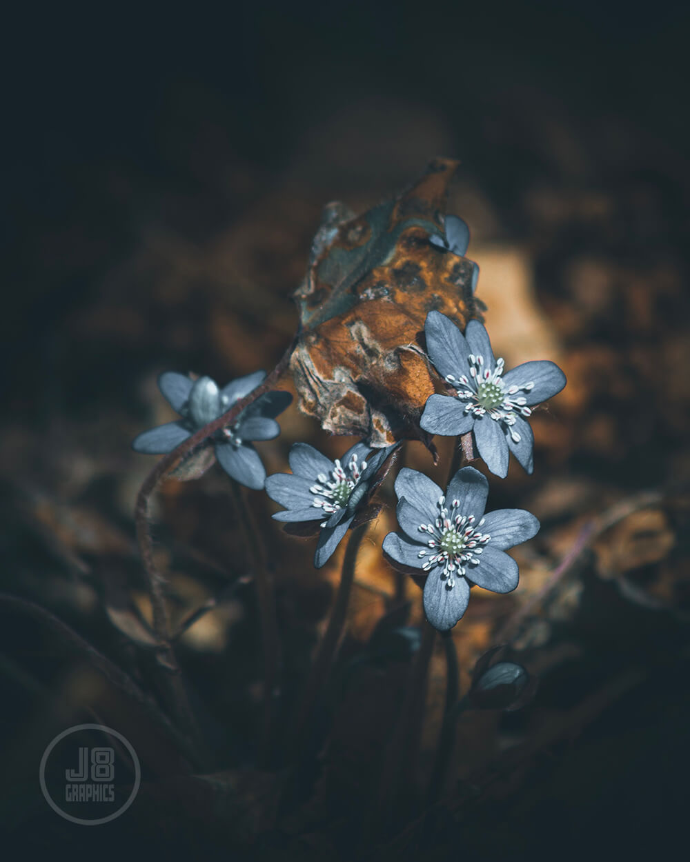 Flower_2_stamp